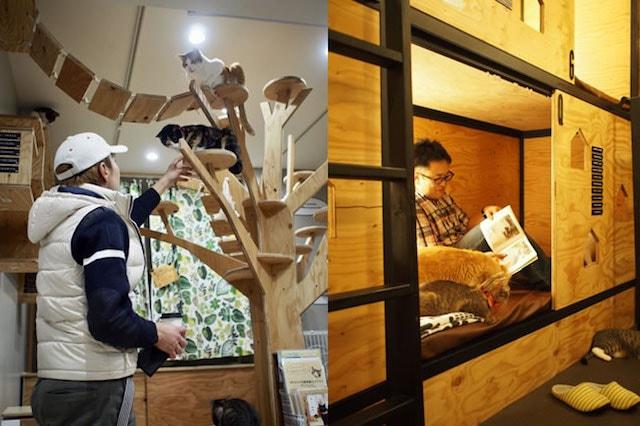 「大阪ネコビル」ネコリパブリック大阪心斎橋店で猫と触れ合う男性