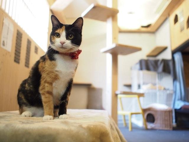 大阪ネコビル・ネコリパブリック大阪心斎橋店にいる保護猫