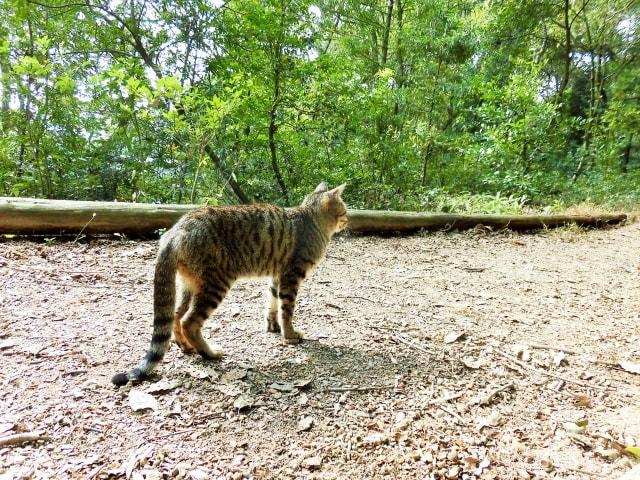 しっぽを下にさげる猫のイメージ写真 ac