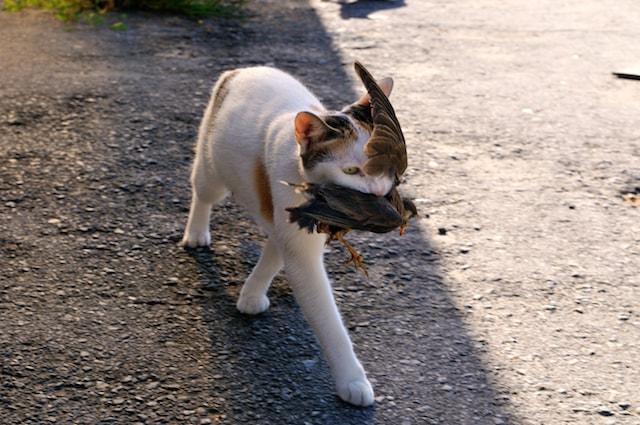 船橋競馬場厩舎で鳥を咥える猫 by 津乗健太