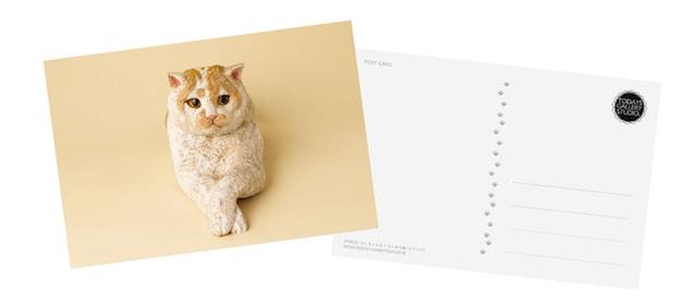スター猫のトレーディングカード