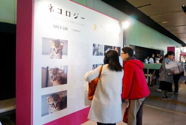 ちよだ猫まつり2017の展示物