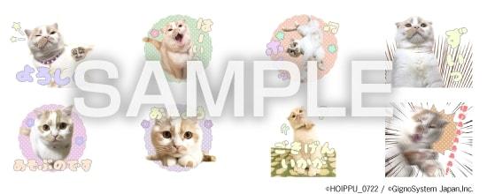 甘え猫「ホイップ」のLINEスタンプ