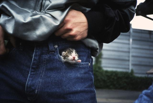 船橋競馬場厩舎スタッフのジーパンのポケットに入る子猫 by 津乗健太