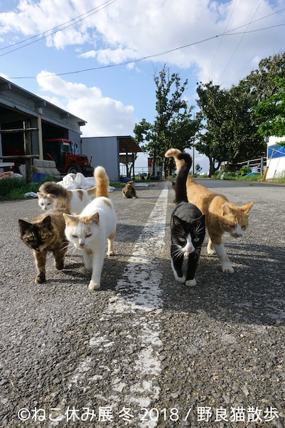 野良猫散歩のネコ写真作品