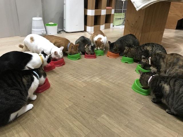 猫のご飯タイム by 大阪ネコビル・ネコリパブリック大阪心斎橋店