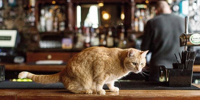 ロンドンのパブにいる猫