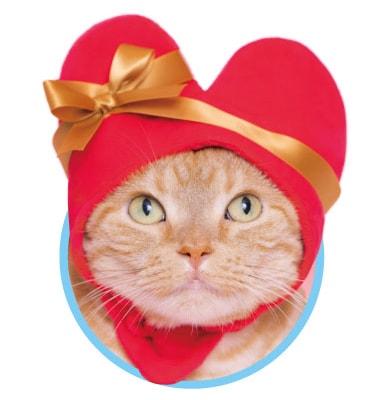 猫用の「ハート」のかぶりもの、レッドカラー
