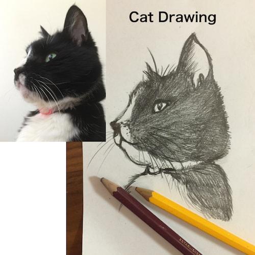 ネコのドローイングワークショップ
