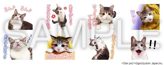 キジ白猫「すずめちゃん」のLINEスタンプ