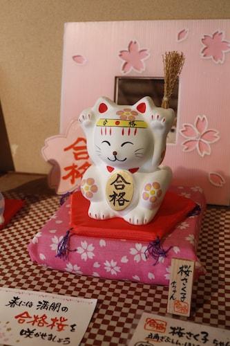 受験生に人気の追い出し猫「桜さく子ちゃん」