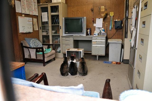 船橋競馬場厩舎のストーブで暖を取り3匹の猫 by 津乗健太