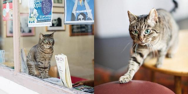 パブの店内くつろぐキジトラ猫 by ロンドンのパブねこ