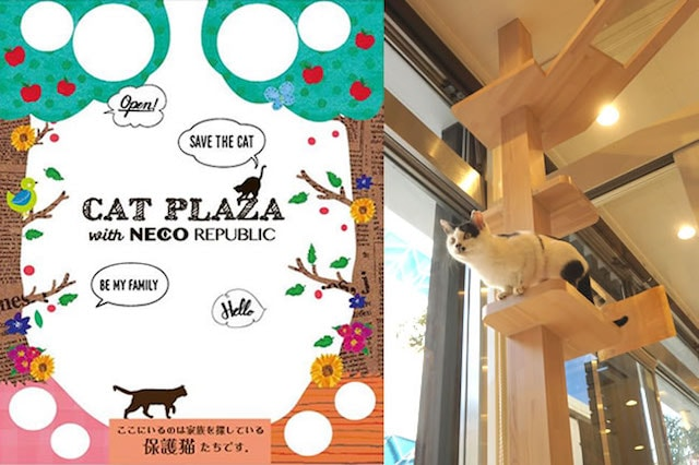 CAT PLAZA with NECO REPUBLIC