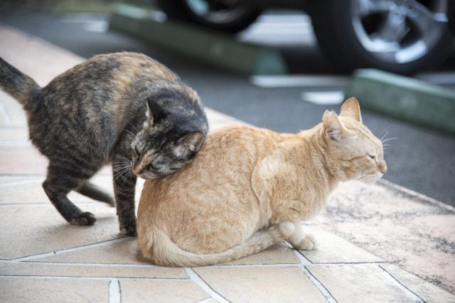 体を擦り付ける仲良し猫のイメージ写真