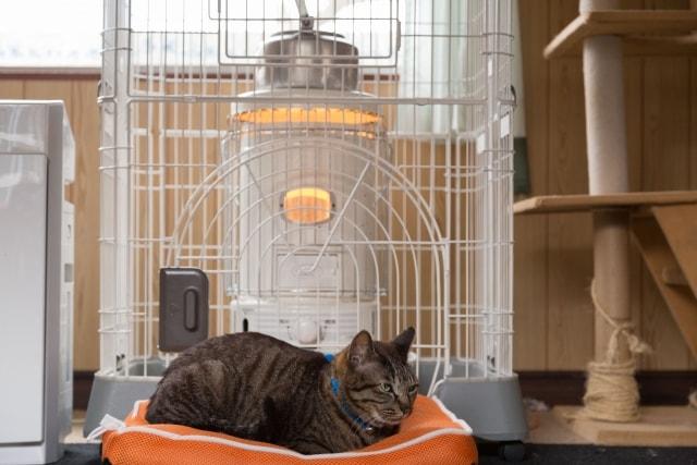 一般的な猫ケージのイメージ写真