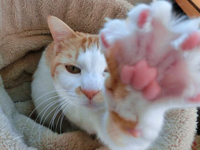 肉球を見せる猫のイメージ写真