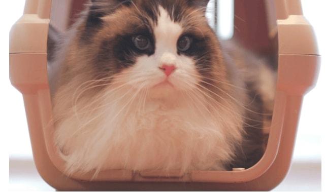 スマート体重計「くるみスケール」の付いたキャリーで体重測定中の猫