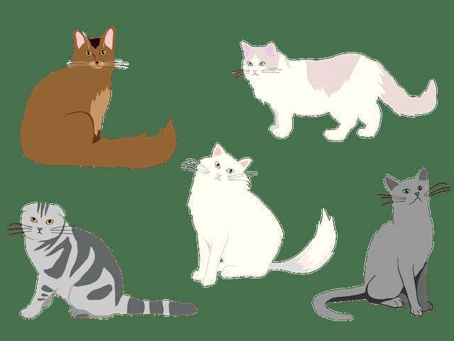 猫の種類イメージイラスト
