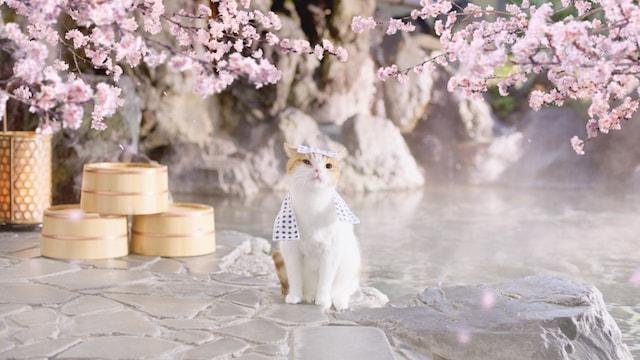 温泉にやってきた猫のにゃらん