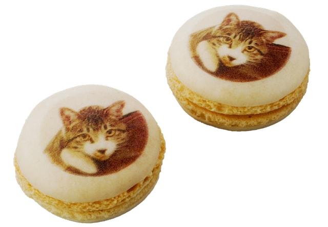 ねこマカロン by ブールミッシュの猫スイーツ