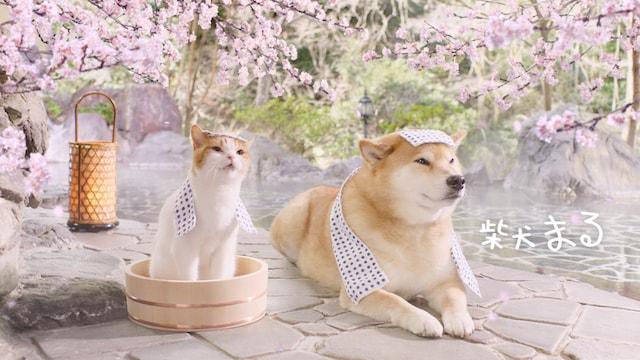 仲良く入浴する「にゃらん」と「柴犬まる」