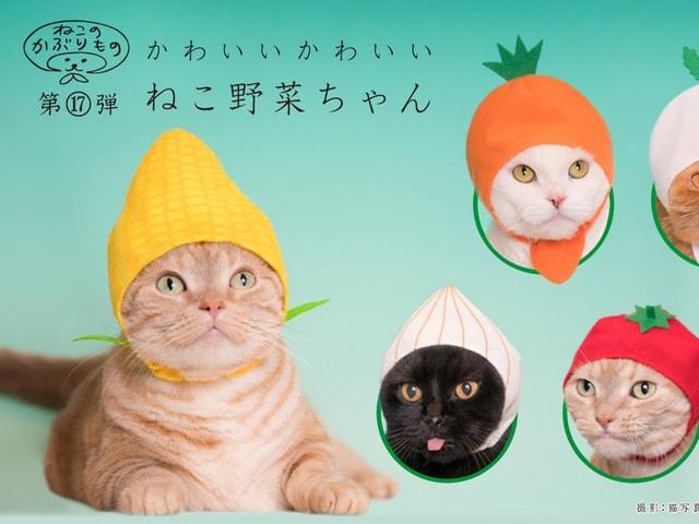 ヘルシーな野菜に変身するニャ!かわいい猫のかぶりもの2月の最新作