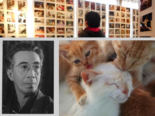 猫を愛した作家の企画展「大佛次郎×ねこの写真展 2018」