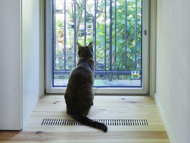 犬猫と暮らす快適な住まいをテーマにセミナーやワークショップを開催