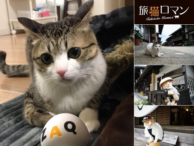 JCOMテレビの2月は猫の日特集、人気猫すずめちゃんのオフショットも公開