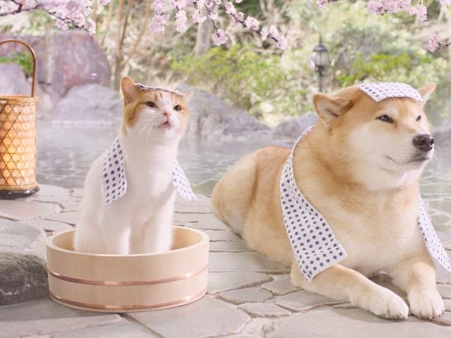 じゃらんの猫キャラ「にゃらん」と「柴犬まる」がテレビCMで共演