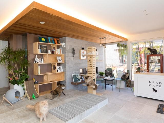 大和ハウスの住宅展示場が猫カフェ風にリニューアルオープン