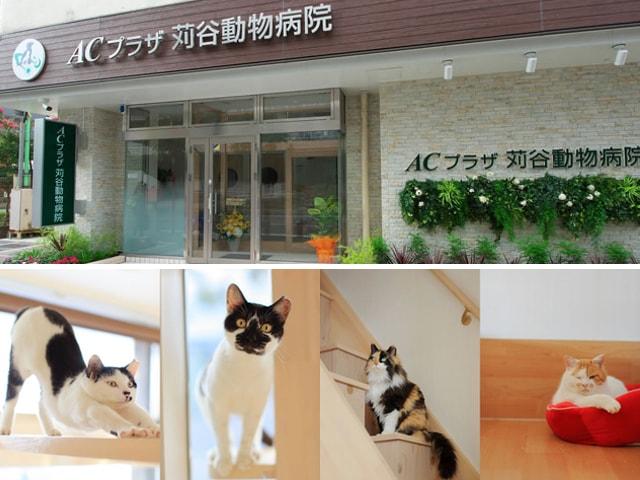 ACプラザ苅谷動物病院の中にネコリパブリックの保護猫専用スペースが誕生
