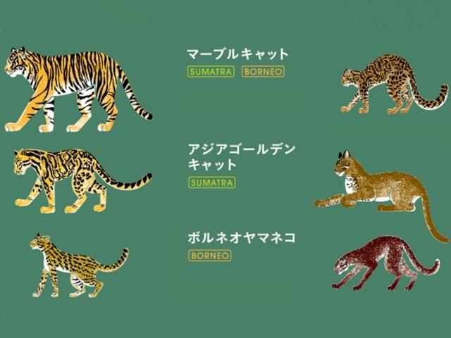 WWFジャパンが野生ネコの支援を呼びかけるキャンペーンを実施中