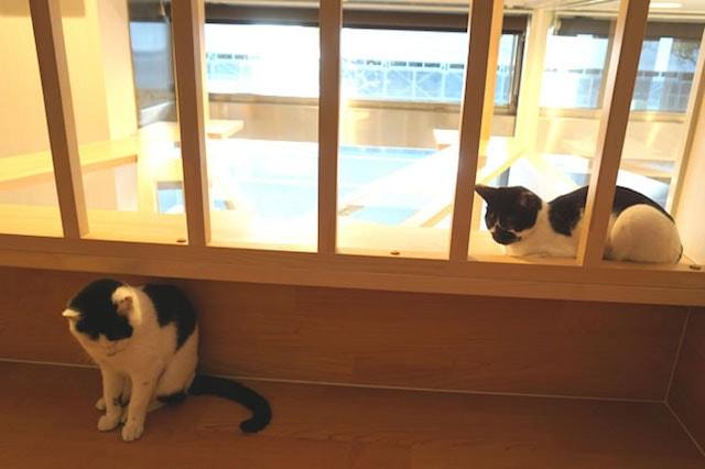 保護猫専用スペース2 in ACプラザ苅谷動物病院の葛西橋通り病院