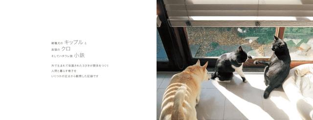 桑原奈津子さんが飼っている保護犬「キップル」、黒猫「クロ」、黒白ハチワレ猫の「小鉄」
