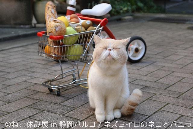 猫の写真作品 by ネズミイロのネコとバニラ