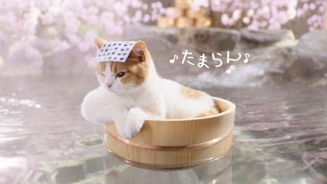 温泉に入浴する「にゃらん」