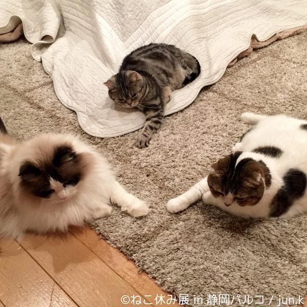 猫の写真作品 by jun.k