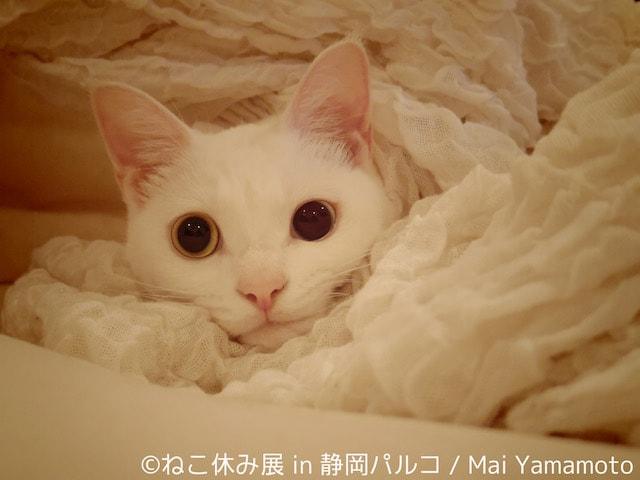 猫の写真作品 by Mai Yamamoto