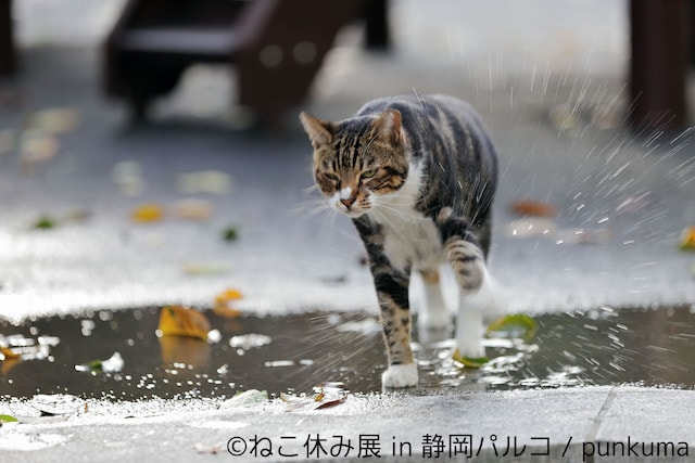 猫の写真作品 by punkuma