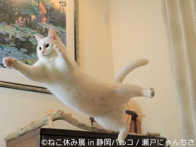 猫の写真作品 by 瀬戸内にゃんちさ