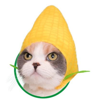 猫用が身に着ける「野菜」のかぶりもの、とうもろこし