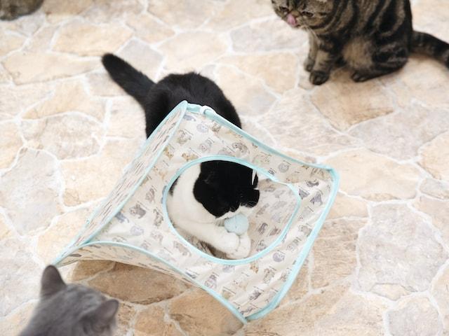 ポンポンつき猫ハウスで遊ぶ猫たち