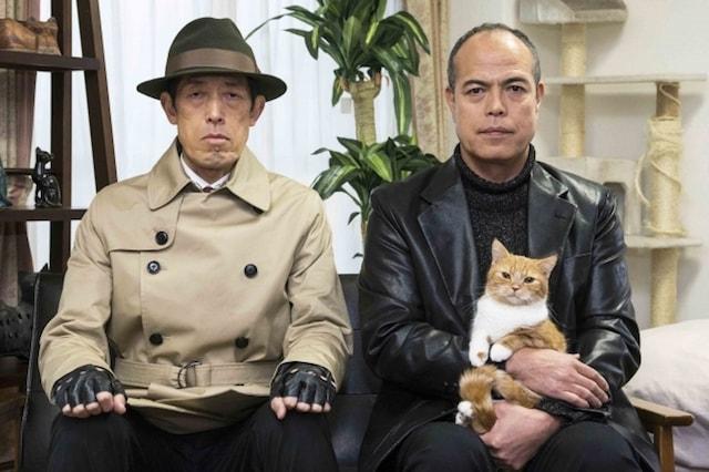 猫のテレビドラマ「猫とコワモテ2(にゃん)」