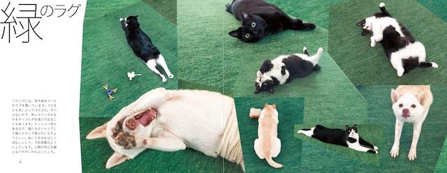 緑のラグを切り口にした犬猫観察記 by いっぴきとにひき