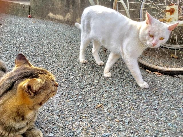 無用な喧嘩を避けて、その場をやり過ごそうとする猫