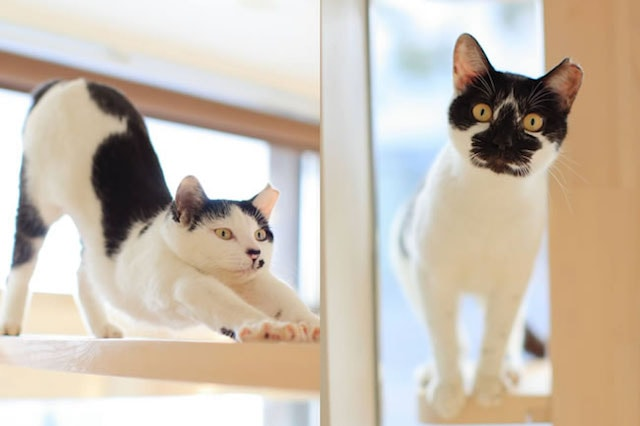 CAT PLAZA with NECO REPUBLICで生活している保護猫1