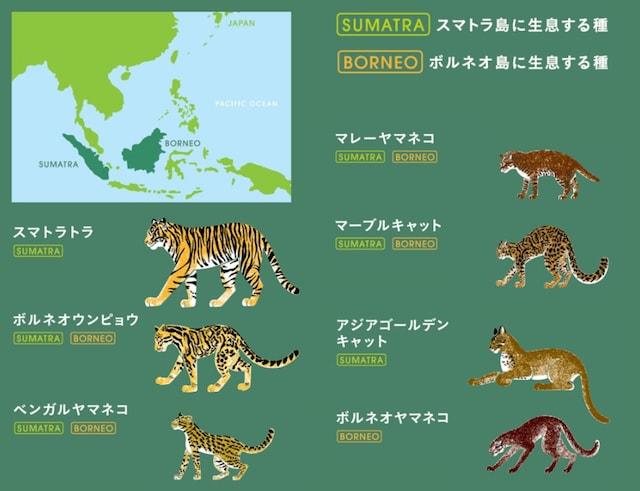 スマトラ島とボルネオ島に生息する7種の野性ネコ科動物
