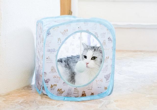 ポンポンつき猫ハウスで寛ぐ猫